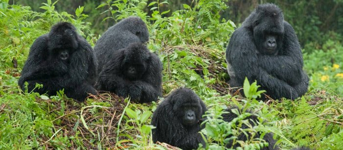 Bwindi Impenetrable Forest Uganda