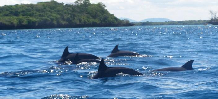 Kisite Mpunguti - Home of the Dolphins