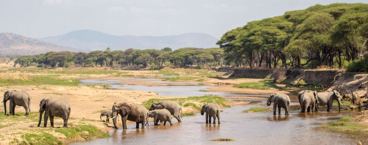 The Ruaha National Park
