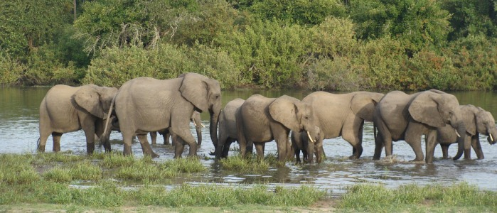 Elephants at The Selous Game Reserve
