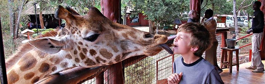 giraffe-centre-nairobi