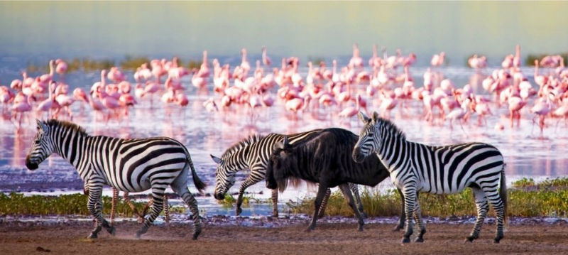 The Lake Manyara National Park